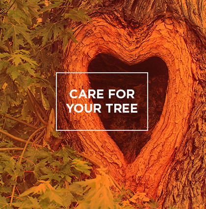 Care For Your Tree