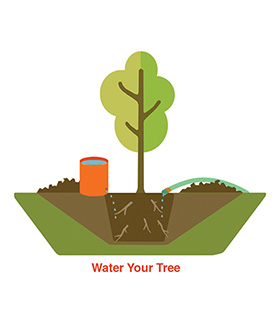 Water your tree