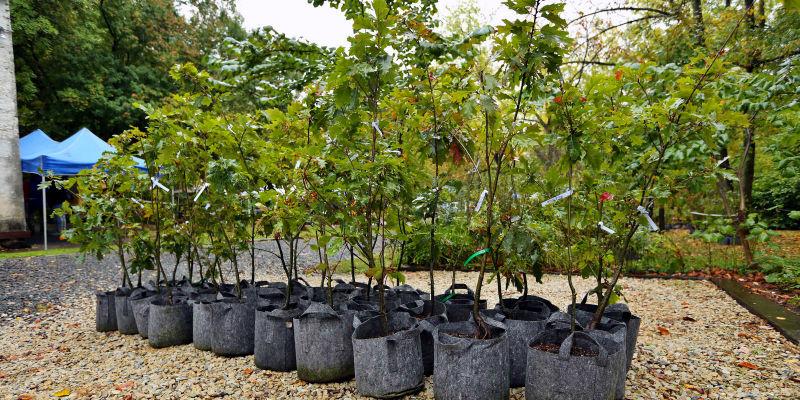 Free Yard Trees