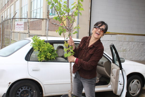 Congreso/North Philly Yard Tree Giveaway @ Congreso de Latinos Unidos courtyard