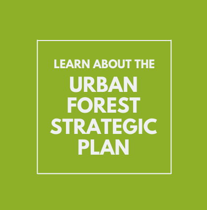 Engage with Philly's Urban Forest Strategic Plan!